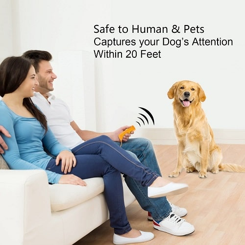 One Simple Idea to Train the Behavior of Disobedient Dogs-min
