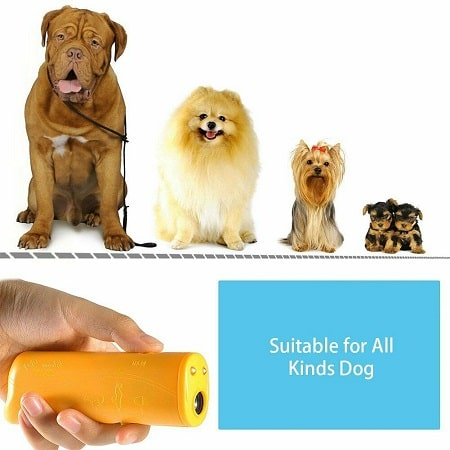Will It Work On Your Dog-min